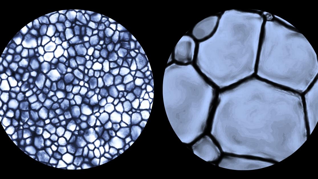 Des cristaux de glace à l'échelle d'un microscope; de petits cristaux de glace à gauche, et de plus gros cristaux de glace à droite.